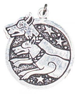CWN ANNAN-chien de chasse du 14 Février au 08 mars
