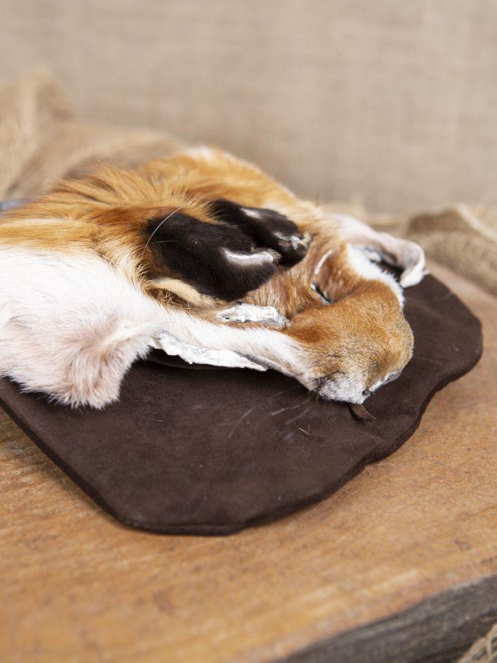 Sacoche de ceinture tête de renard, en brun 2